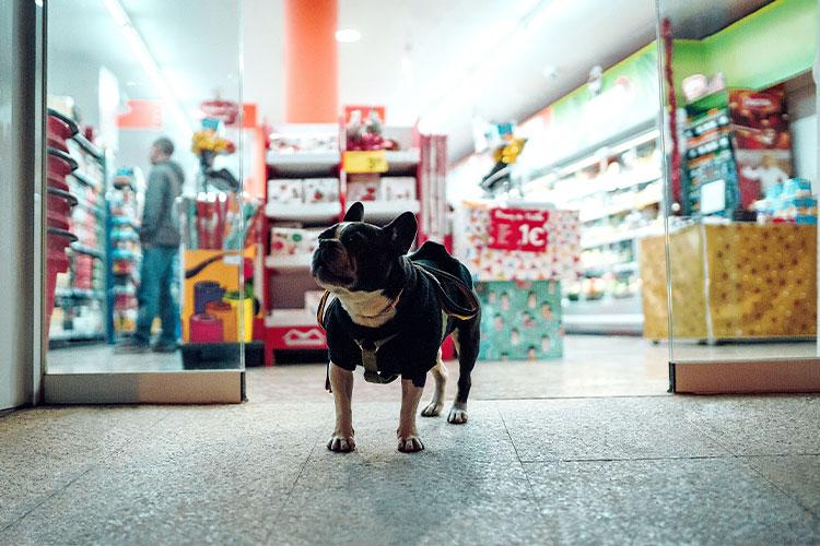Hund von einem Heimtierbedarfsgeschäft